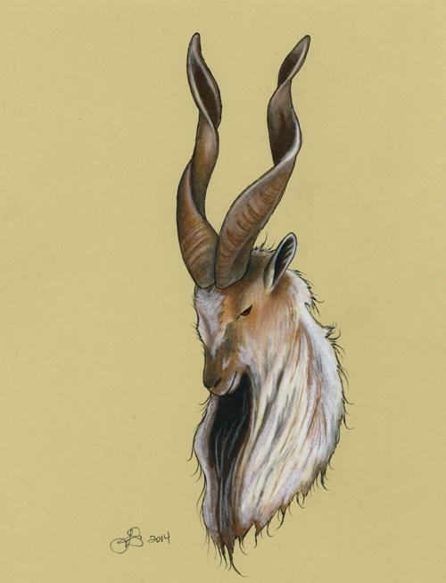 Goat by Jessica Szabo