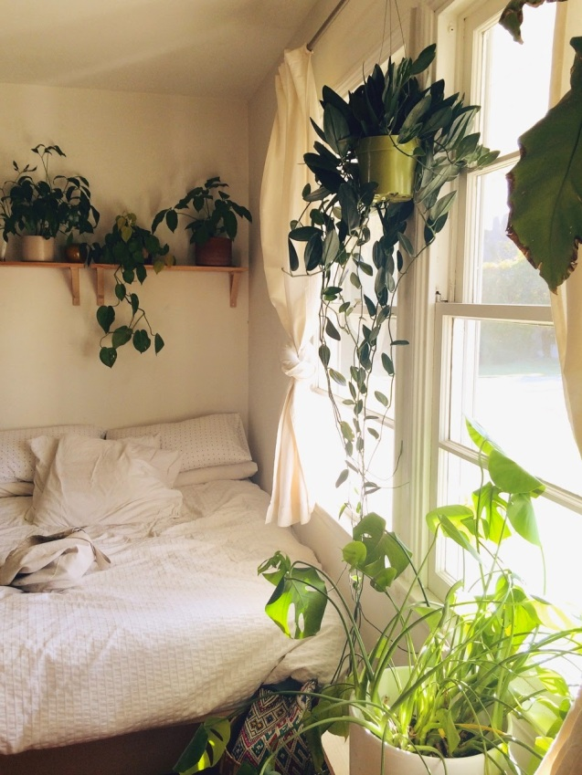 plants and room